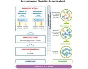 La dynamique et l'évolution du monde vivant