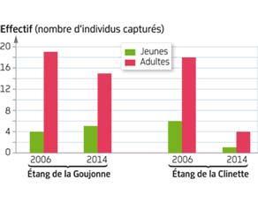 Évolution des effectifs de deux populations de cistudes d'Europe en France