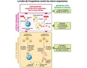 La lutte de l'organisme contre les micro-organismes