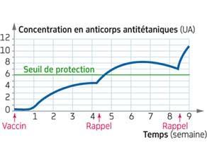 Évolution de la concentration en anticorps antitétaniques au cours d'une vaccination