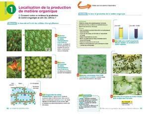 Localisation de la production de matière organique, à l'échelle cellulaire