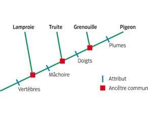Arbre phylogénétique de quelques Vertébrés