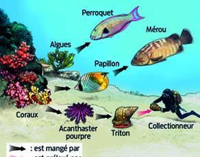 Les relations entre les êtres vivants dans un écosystème corallien