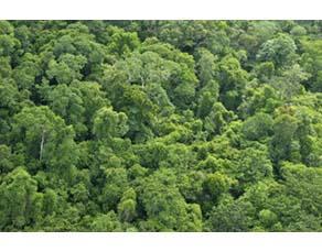 Canopée de la forêt amazonienne