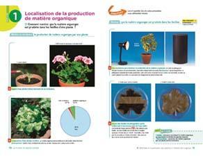 Localisation de la production de matière organique, à l'échelle des organes