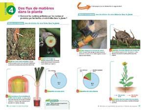 Des flux de matières dans la plante, à l'échelle des organes