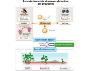 Reproduction sexuée et asexuée : dynamique des populations