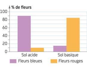 Observation de la couleur des fleurs de mouron des champs en fonction de la nature du sol
