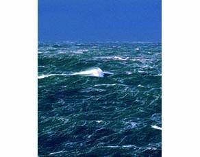 Surface d'un océan lorsqu'il y a du vent
