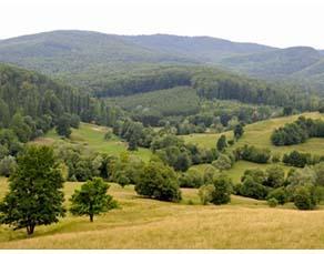 Forêt d'arbres feuillus de l'Est de l'Europe en un climat tempéré