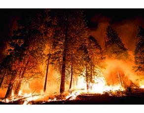 Incendie dans la forêt nationale de Sequoia de Californie
