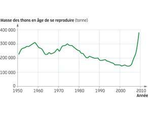 Évolution de la population de thons rouges en âge de se reproduire