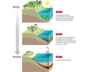La formation du pétrole, ressource énergétique fossile