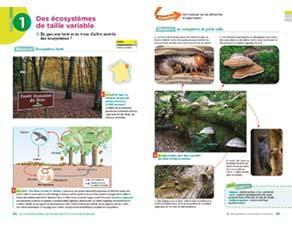 Des écosystèmes de taille variable