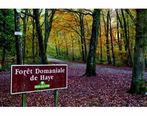 La forêt de Haye, en Lorraine