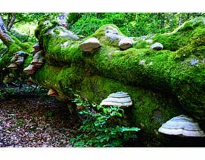 Un tronc d'arbre mort dans une forêt
