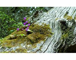 Des végétaux sur un tronc d'arbre mort