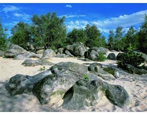 Un site d'observation en forêt de Fontainebleau : un lieu avec ses propres paramètres physiques