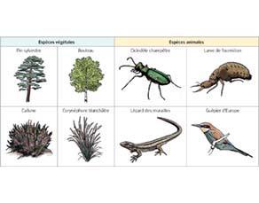 Principales espèces observées dans une zone forestière à sol sec