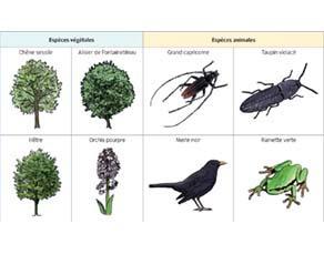 Principales espèces observées dans une zone forestière à sol humide