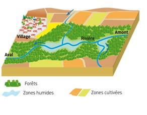 Plusieurs écosystèmes le long d'une rivière