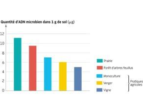 Quantité d'ADN microbien dans le sol en fonction de l'écosystème qui le recouvre