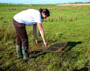 Installation de cages de protection des nids d'oiseaux
