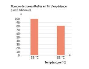 Influence de la température sur le nombre de zooxanthelles d'un fragment de corail