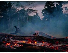 Déforestation en forêt amazonienne