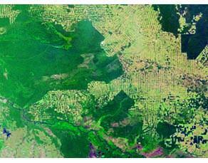 Image satellitaire de la forêt amazonienne, au sud du Brésil en 2006