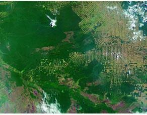 Image satellitaire de la forêt amazonienne, au sud du Brésil en 2000