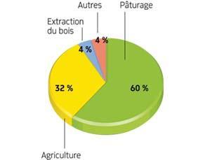 Causes principales de la déforestation en Amazonie