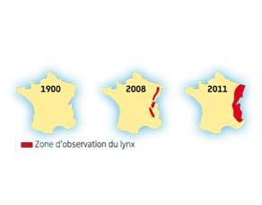 Suivi des observations de lynx en France