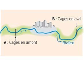 Lieux de dépôt des cages dans la rivière