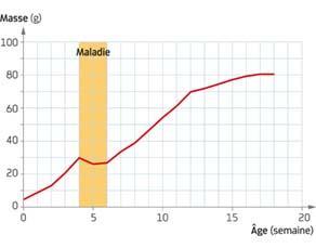 Évolution de la masse d'une souris en fonction de son âge