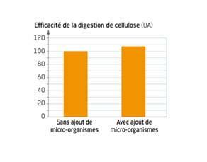 Efficacité de la digestion de cellulose chez la vache