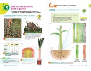 Des flux de matières dans la plante