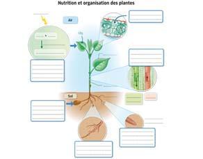 Nutrition et organisation des plantes - à compléter