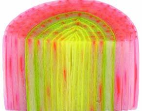 Coupe de poireau ayant été plongé dans un colorant rouge