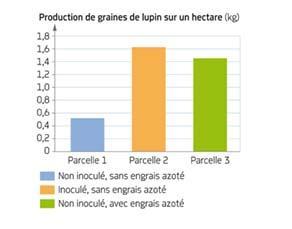 Production de graines de lupin selon les conditions de culture