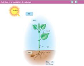 Nutrition et organisation des plantes