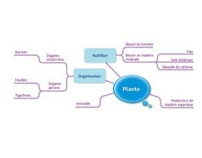 Plante : acquis du cycle 3