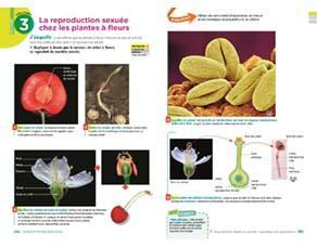 La reproduction sexuée chez les plantes à fleurs