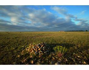 Un écosystème de la plaine de Crau