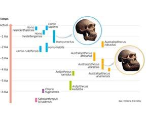 Quelques espèces du groupe des Homininés
