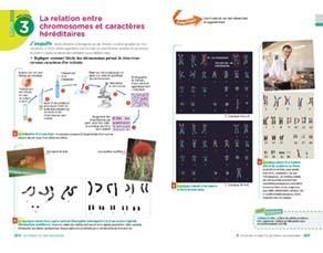 La relation entre chromosomes et caractères héréditaires