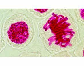 Relation entre chromosomes et molécule d'ADN