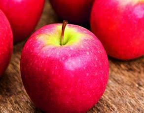 Pomme Pink Lady non mutée