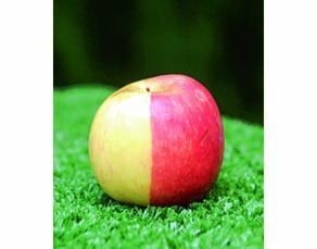 Pomme Pink Lady mutée