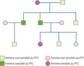 L'arbre généalogique d'une famille avec la sensibilité au PTC